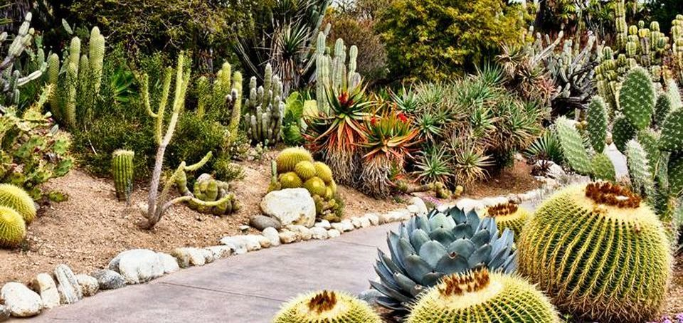 Desert Garden Preparation: Tips about Beginning a Vegetable Garden within the Desert